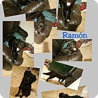 Adopt A Pet :: Ramon - LAKEWOOD, CA