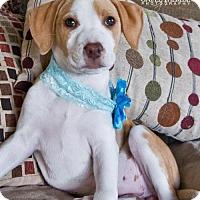 Adopt A Pet :: Cami - Pearland, TX