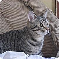 Adopt A Pet :: Quincy - Chowchilla, CA