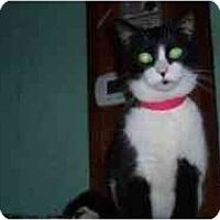 Adopt A Pet :: Sadie Lynn - Hamburg, NY