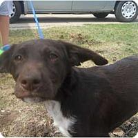 Adopt A Pet :: LuLu - Roseville, MI