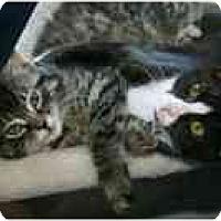 Adopt A Pet :: Orlando (& Tessa) - Arlington, VA