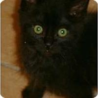 Adopt A Pet :: Auggie - Brea, CA