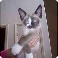 Adopt A Pet :: Ziggy - Irvine, CA