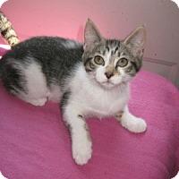 Adopt A Pet :: Dezi - Bloomsburg, PA