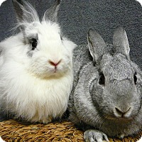 Adopt A Pet :: Bon Bon and Shiloh - Newport, DE