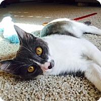 Adopt A Pet :: Jack - Modesto, CA