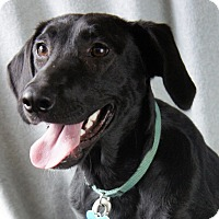 Adopt A Pet :: Emmaline - Minneapolis, MN