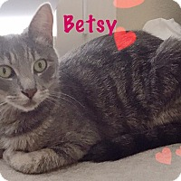 Adopt A Pet :: Betsy - Foothill Ranch, CA