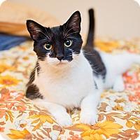 Adopt A Pet :: Buttons - Fredericksburg, VA