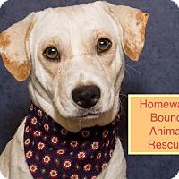 Adopt A Pet :: Spencer - Bedford, TX