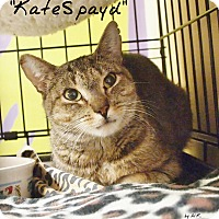 Adopt A Pet :: Kate Spayd - Ocean City, NJ