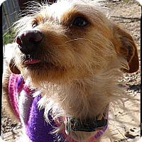 Adopt A Pet :: Honey - Johnson City, TX