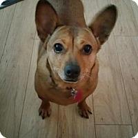 Adopt A Pet :: LUCY - Jackson, NJ