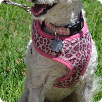 Adopt A Pet :: Tiffany - Simi Valley, CA