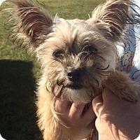 Adopt A Pet :: Preston - Rockville, MD