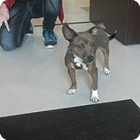 Adopt A Pet :: Tinker - Mt. Gilead, OH