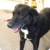 Adopt A Pet :: Oreo - Irwin, PA
