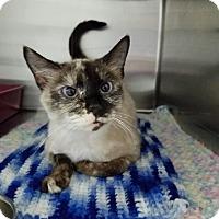 Adopt A Pet :: Sheba - Elyria, OH