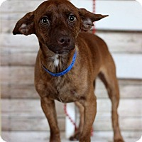 Adopt A Pet :: Mitchell - Waldorf, MD