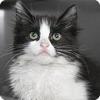 Adopt A Pet :: Tortilla - Hawthorne, CA