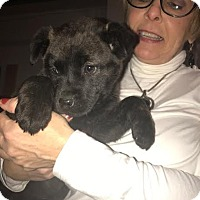 Adopt A Pet :: Wiza--arriving soon - Chichester, NH