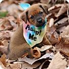 Adopt A Pet :: Fleur (Purple Flowers) / Maybelle
