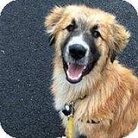 Adopt A Pet :: Dude - Austin, TX