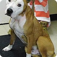Adopt A Pet :: Thor - Washington Court House, OH