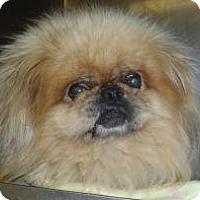 Adopt A Pet :: Tommy - Chantilly, VA