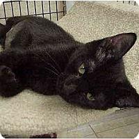 Adopt A Pet :: Karla, Geri & Carmine - Deerfield Beach, FL