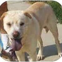 Adopt A Pet :: Brando - Bethesda, MD