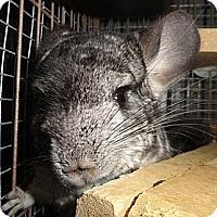 Adopt A Pet :: Erie - Titusville, FL