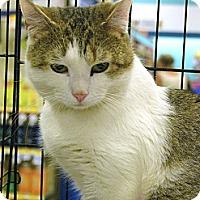 Adopt A Pet :: Titus - Pittstown, NJ