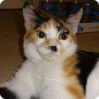 Adopt A Pet :: Honeybee - Colmar, PA