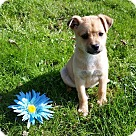 Adopt A Pet :: Binti! **FOSTER NEEDED**