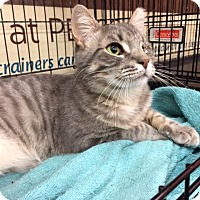 Adopt A Pet :: Abner (AP) - Little Falls, NJ