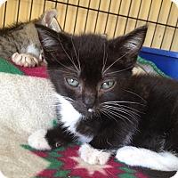 Adopt A Pet :: Lana - Island Park, NY