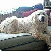 Adopt A Pet :: Ursula - Lincolndale, NY