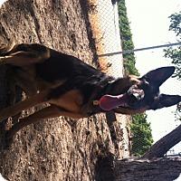Adopt A Pet :: Ava - Orange Cove, CA