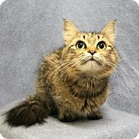 Adopt A Pet :: Boo - Greensboro, NC