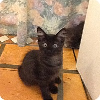 Adopt A Pet :: Zimba - Ft. Lauderdale, FL
