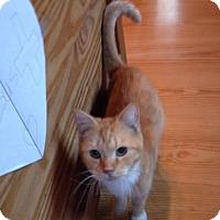 Adopt A Pet :: Glenda - Swansea, MA