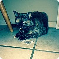 Adopt A Pet :: Sadie - Kennedale, TX