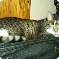 Adopt A Pet :: Jasmin - Edmond, OK