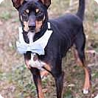 Adopt A Pet :: Sammy - Syracuse, NY
