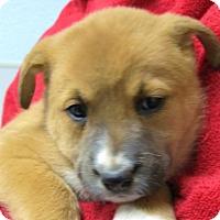 Adopt A Pet :: Galaxy - Wharton, TX