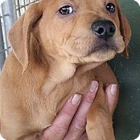 Adopt A Pet :: Ephraim - Gainesville, FL