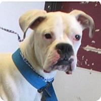 Adopt A Pet :: IVAN - Red Bluff, CA