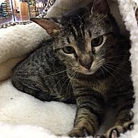 Adopt A Pet :: Ember-13258 - Richardson, TX